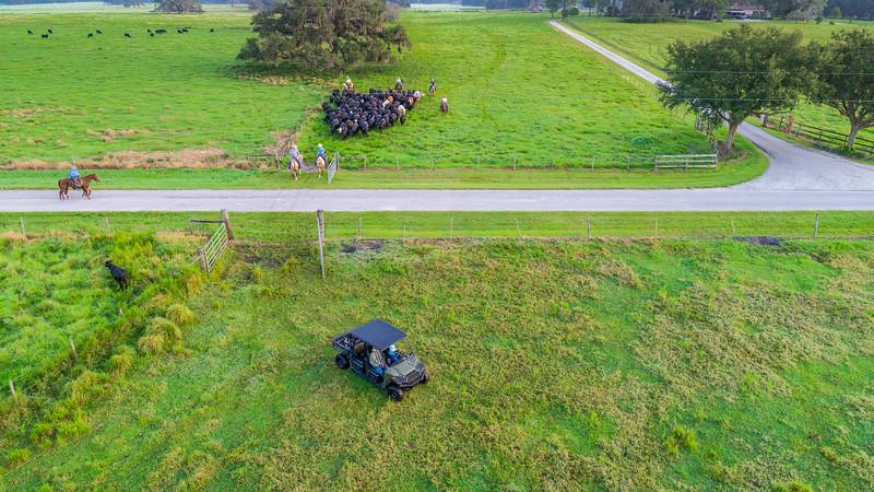 Barthle Cattle  (21 of 27).jpg