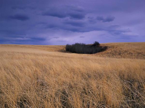 Pastoral, Rural, & Garden