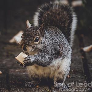 7th May Squirrels