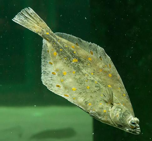 Aquarium Helgoland