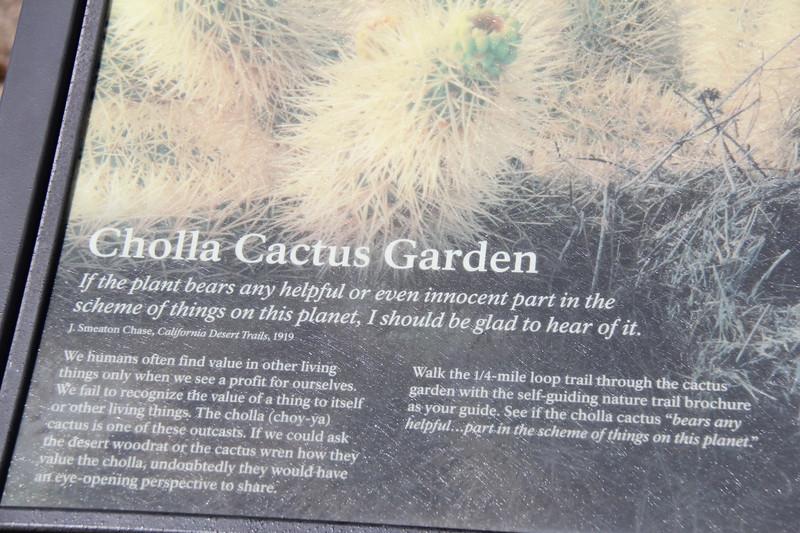 20190524-07-SoCalRCTour-Cholla Cactus Garden Trail-Joshua Tree NP.JPG