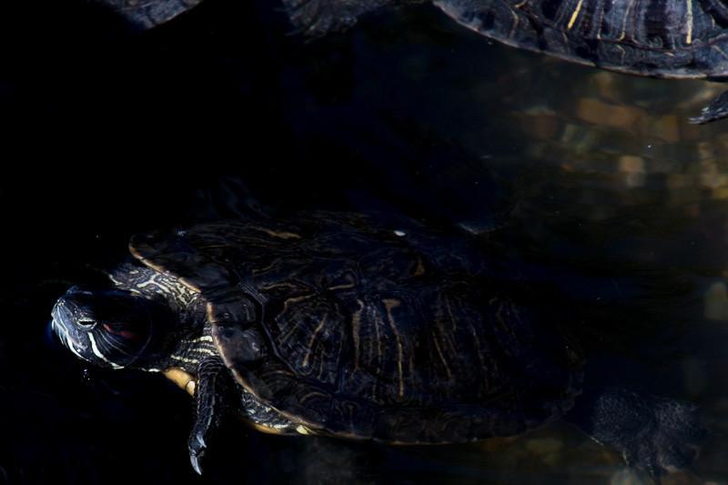 September 29 - Turtles.jpg