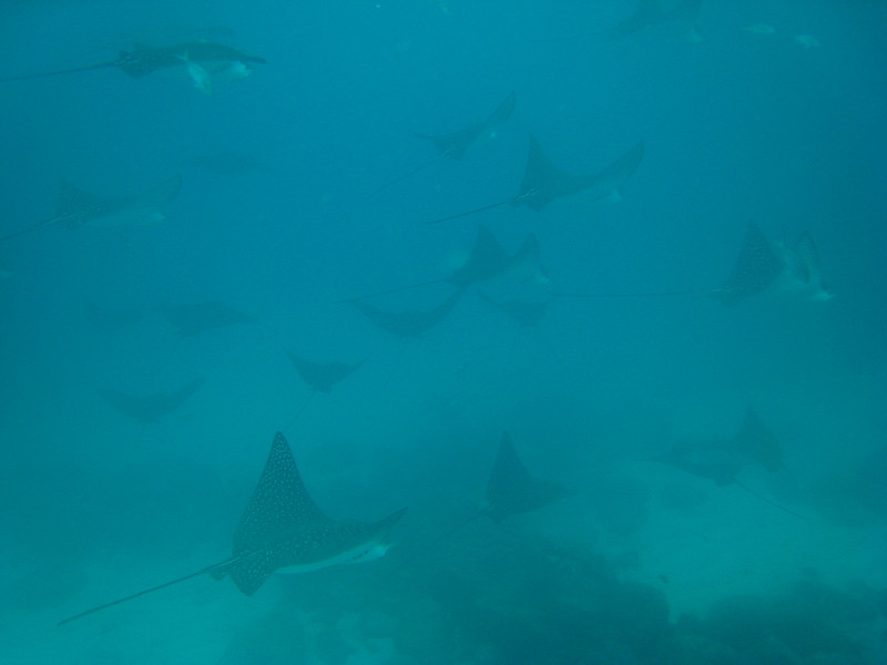 Diving in the Galapagos (380 of 392)