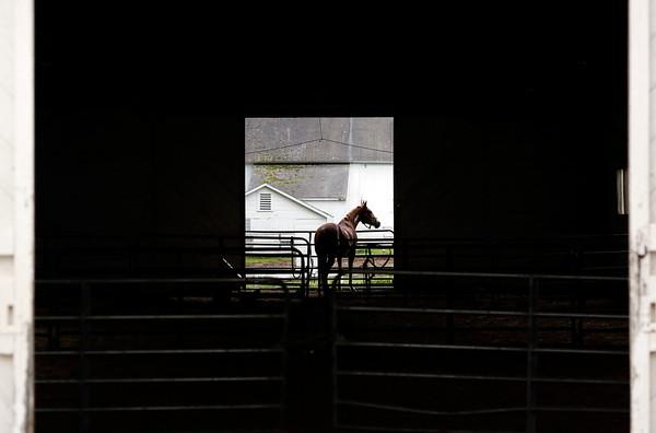 SJH Equestrian-052419