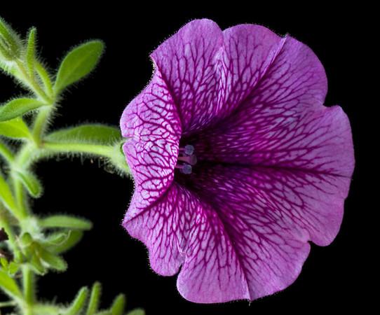 Flora: From Around The World