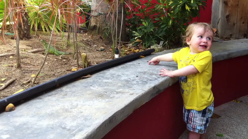 Luca loved looking at the iguanas.