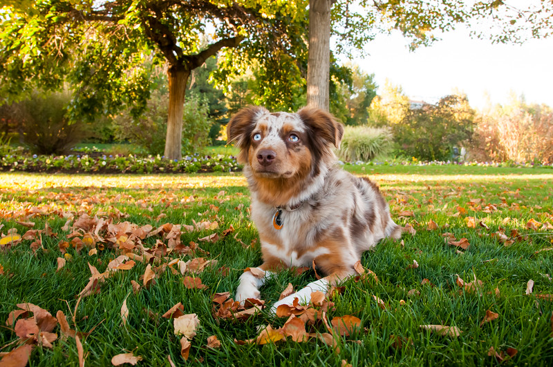 DogDays_Dogs_Gardens_2015_PIC_6485.jpg