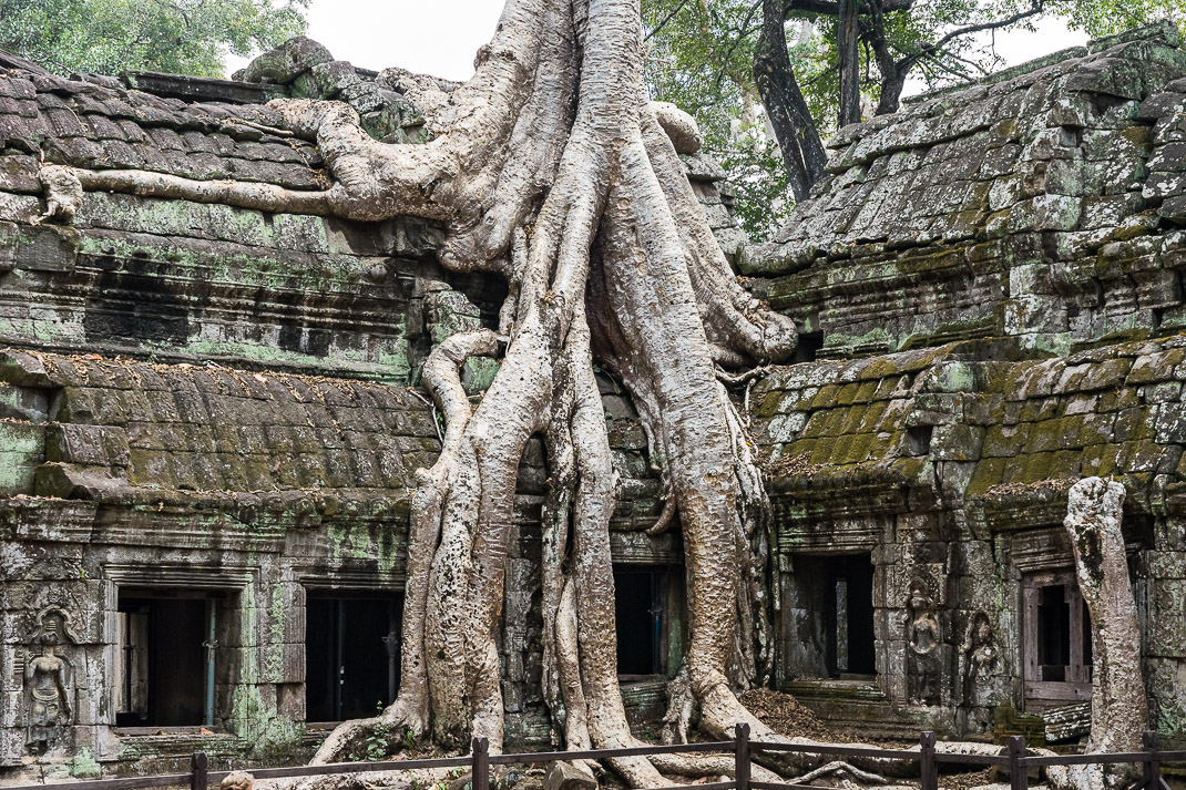 Ta Prohm Roof Tree