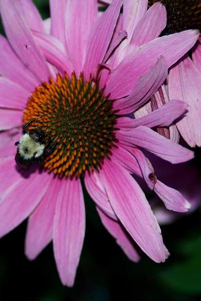 Bee and Flower 5.jpg