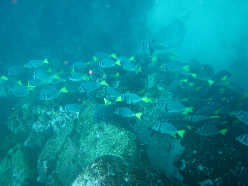 Diving in the Galapagos (324 of 392)