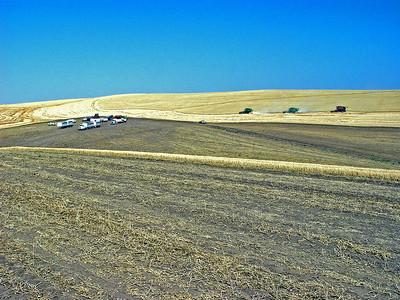 Wheat & Pea Harvest  Farming Scenes