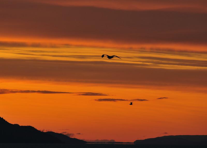 ALS_0407-Sunset-Gull.jpg