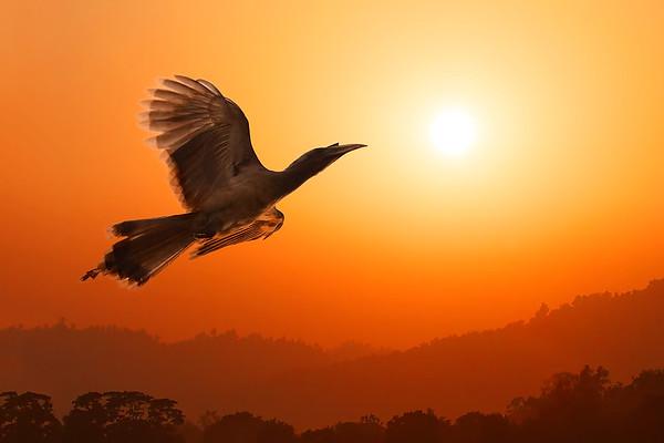 BIRDS / ПТИЦЫ