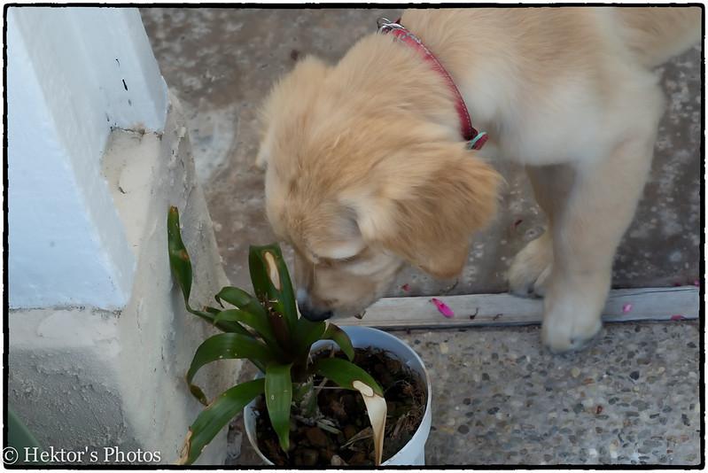 Bella-Cleo-Zoe-9.jpg