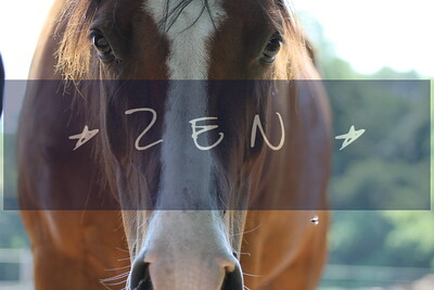 Spirit Horse Center