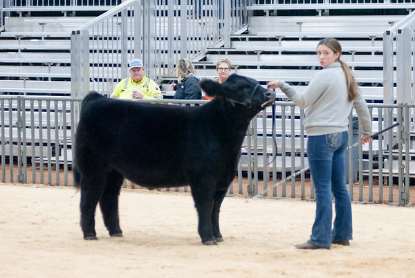 SW District Cattle Shows 2021