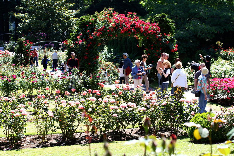 Portland International Rose Test Garden  2254.jpg