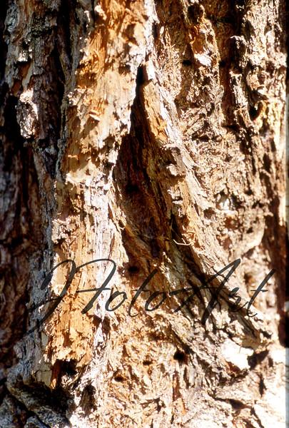 tree 403.jpg