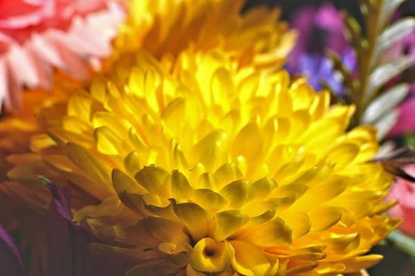 Flowers 11-9-20119