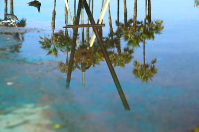 Venice & Venice Beach