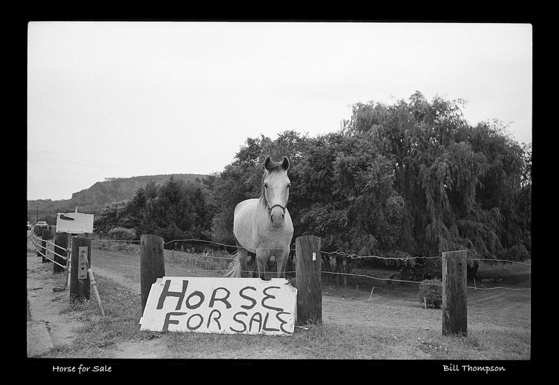 2019-9 (Horse for Sale)U.jpg