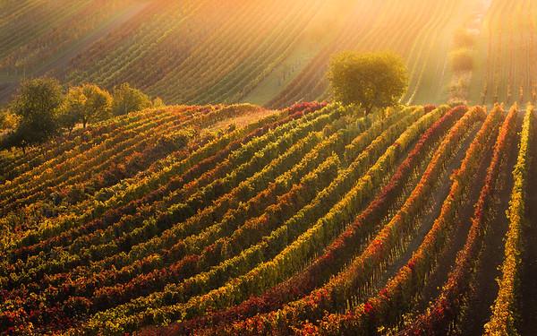 Moravian autumn