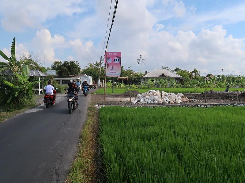 IMG_4578-lost-ricefield.JPG