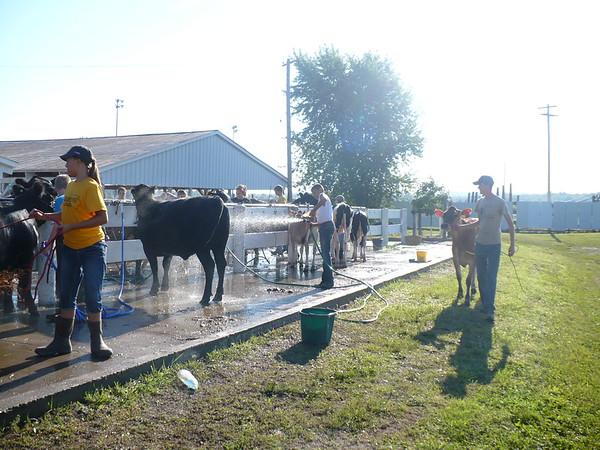 Benton County Fair Market Beef Performance and Open Heifer