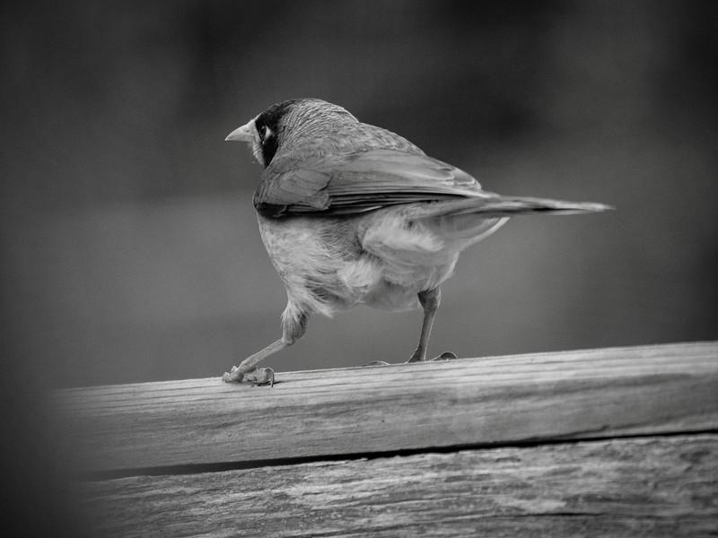 20181010_8346 birds 2471  .JPG