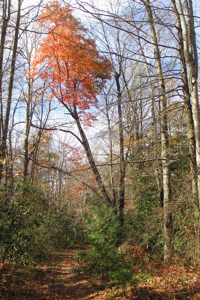 Big Green Trail - 3,980'