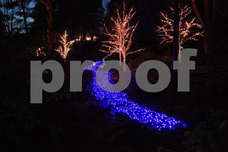 A river of lights at the Bellevue Botanical Garden Christmas light display. Christmas lights,
