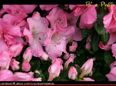 2005 - Hong Kong Flower Show