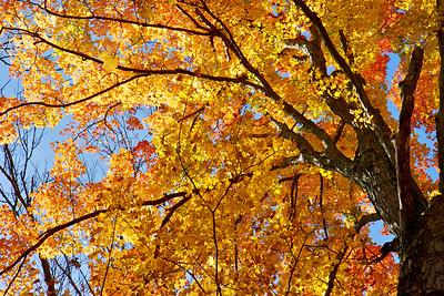 eeler's fall faves
