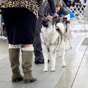 2016-12-09/10 Dallas Dog Show