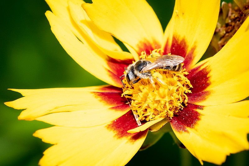 Pollinator-04586.jpg