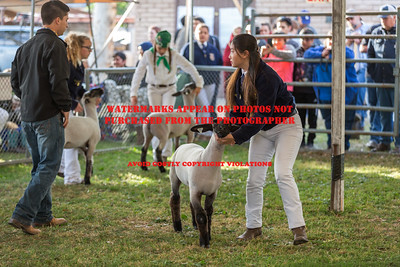 2017 Citrus Fair Sheep