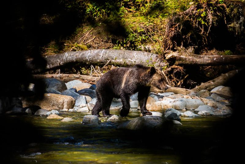 150910_GrizzlyForest_4381.jpg