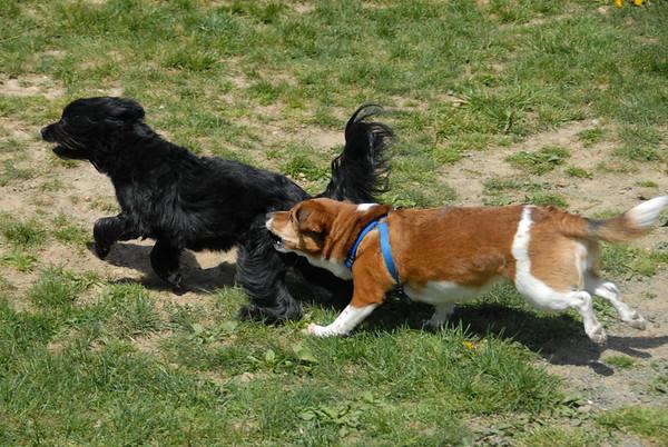 2010-04-24 Denvile Dog Park