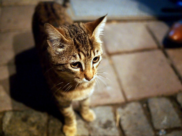 cats in Istanbul: Kebaps and kittens, a perfect smile.