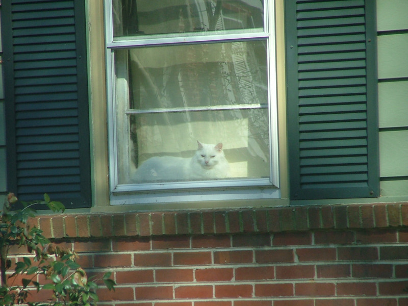 Kitty in the window Forest Circle