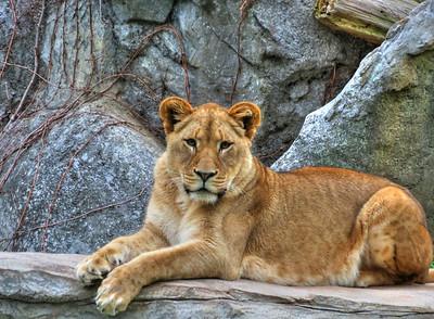 NC Zoo 012012