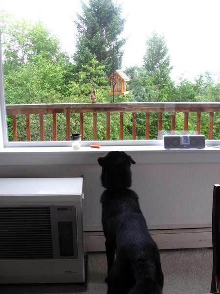 Squirrel mocking Coho