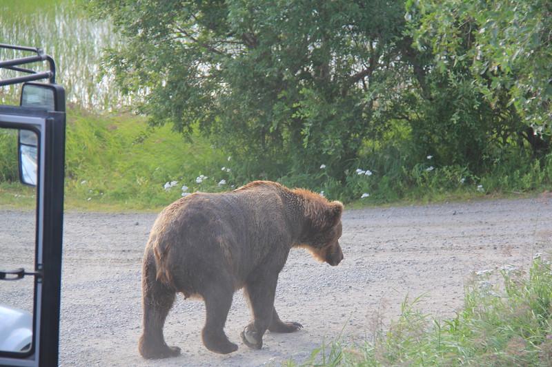 20160714-042 - Katmai NP-Brooks Camp-Different Bear from Bridge Overlook.JPG
