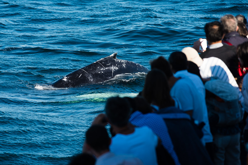 Humpback Whale Watchers-1.jpg