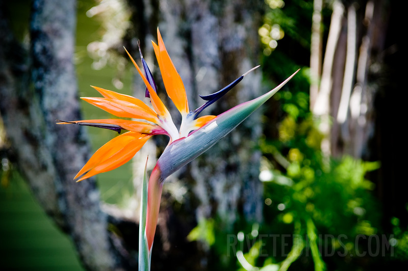 2009_01_Costa_Rica_017