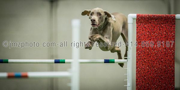 Dog Agility Trials_20131215