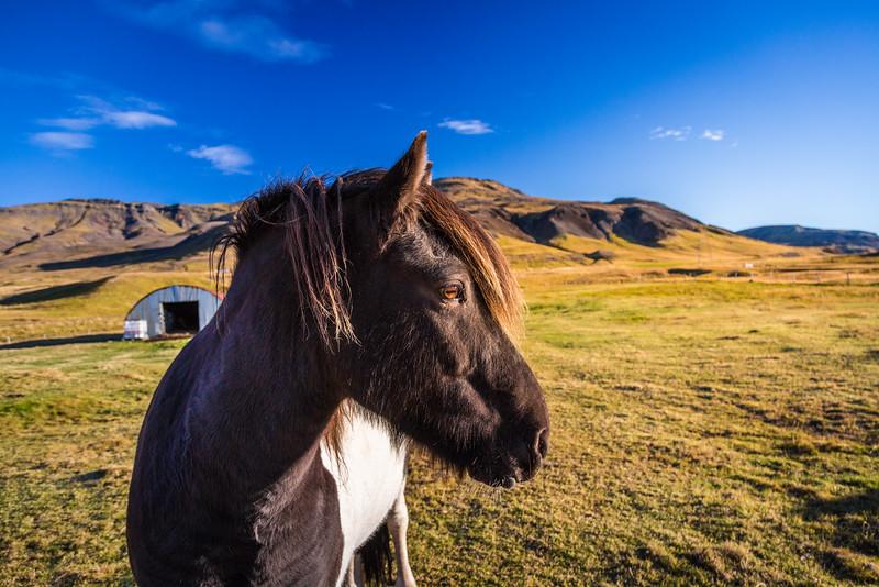 0128-Iceland-Paul-Hamill.jpg