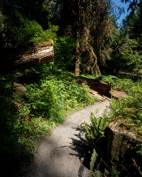 path through logs in the hall of mosses in olympic national park
