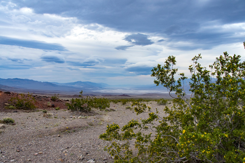Death-Valley-creosote-bush-flowering.jpg