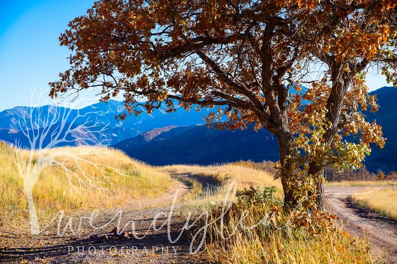 wlc alpine loop 101119 362019.jpg
